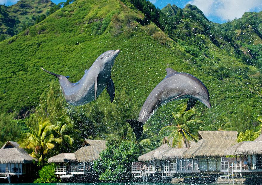 Polinésia Francesa: sua lua de mel no PARAÍSO!
